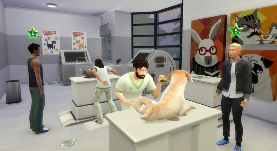 Clínica veterinaria 5 estrellas