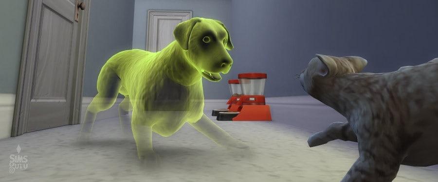 Perro fantasma
