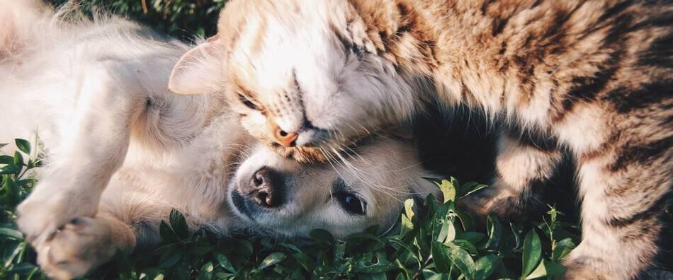 4 desafíos para ayudar a perros y gatos sin hogar
